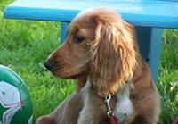 Hond aangelijnd op Camperplaats Waterloo in Friesland