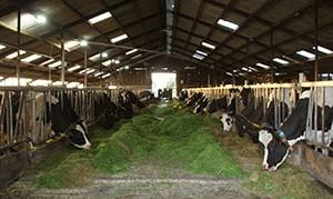 koeien-en-kinderen-op-boerderij-camperplaats-Waterloo-Friesland